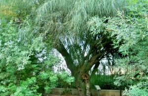 Jardines de las Delicias de Arjona